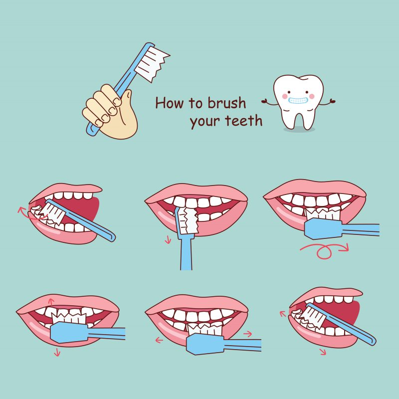 an illustration teaching you how to brush your teeth